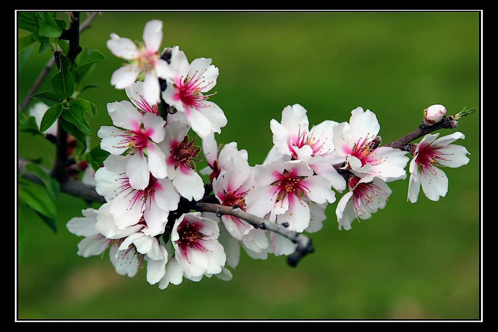 Feliz dia de la Primavera y del estudiante !!!