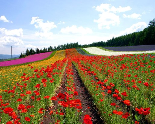 619149__flowered-field_p